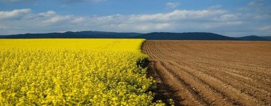 IFCS Pratiche Agricole